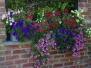 Jardinières d'été
