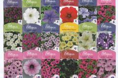 Les fleurs d'été disponible en cette période de confinement